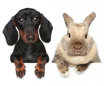 hvad koster det at kastrere en kanin